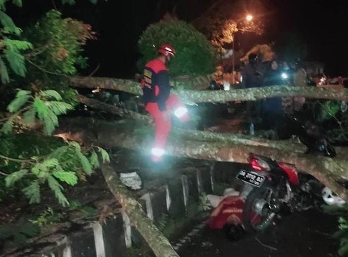 AYAH DAN ANAK TERTIMPA POHON TUMBANG DI KAPUAS 1
